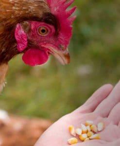Huevos ecológicos Euskaber